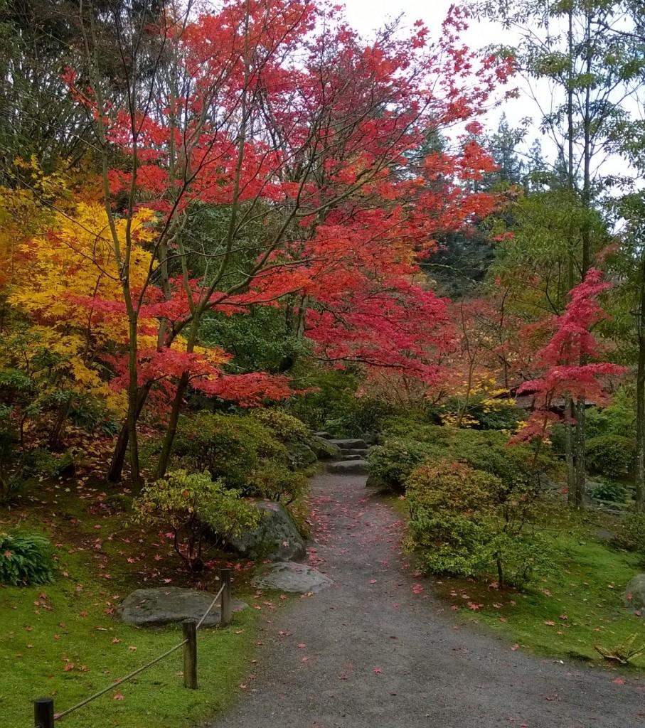 Japanese Garden in the Washington Park Arboretum