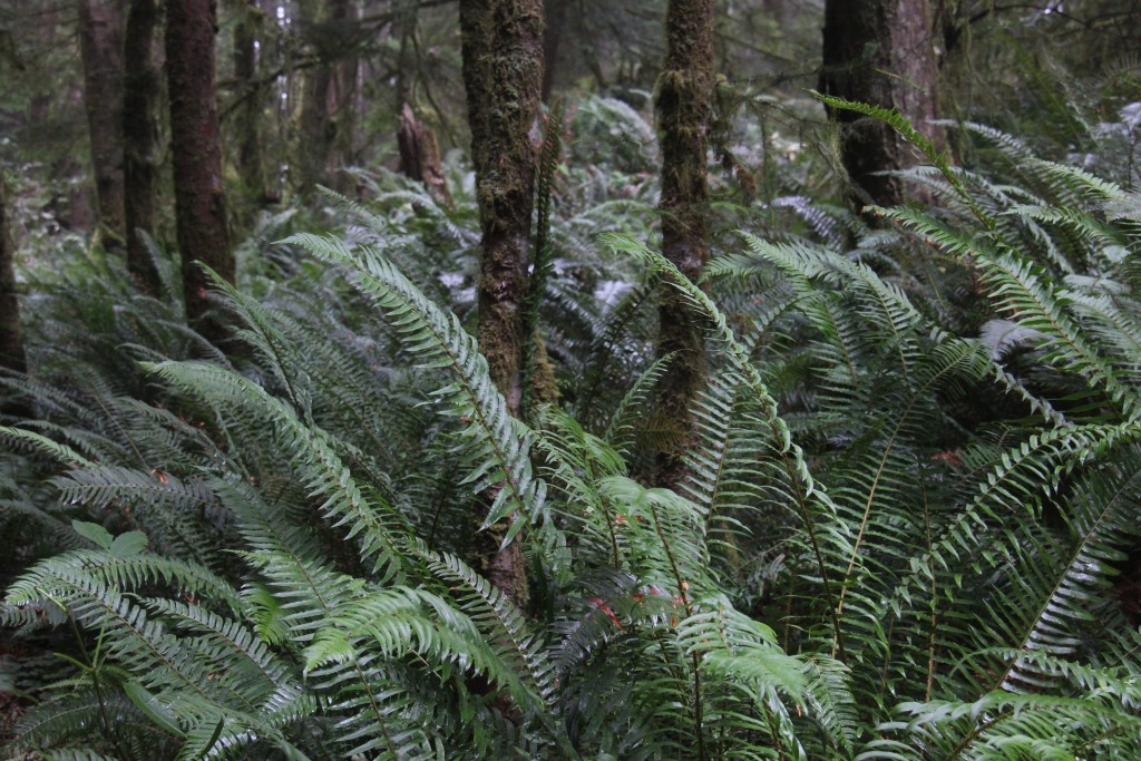 ecola-state-park-9