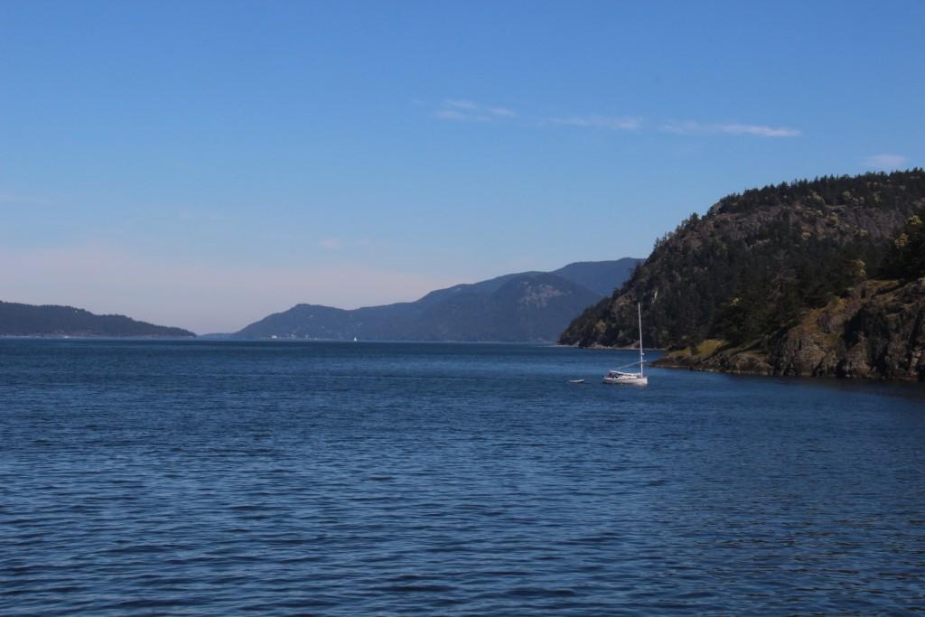 orcas-1