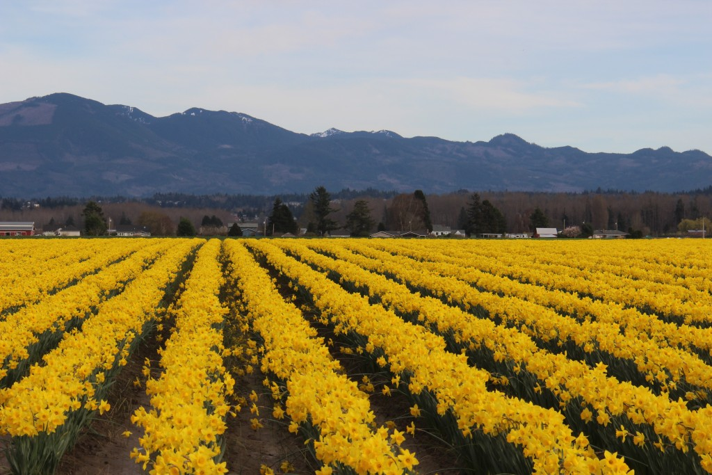 skagit-valley-6
