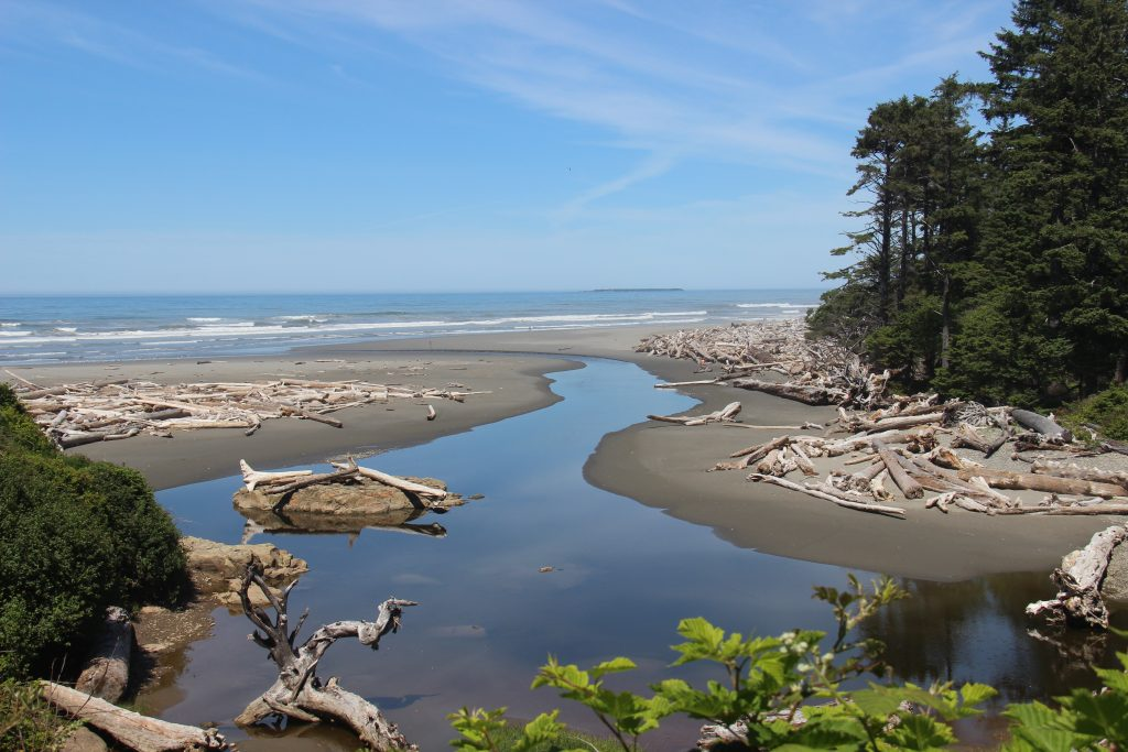washington-coast-kalaloch-beach-1